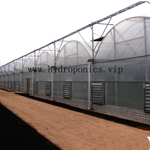 Multi span film greenhouse